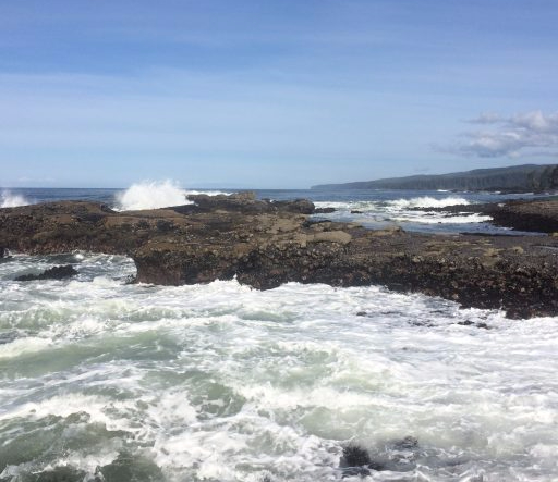 Wave exposed rocky shore